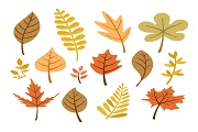 autumnal leaves collection vector