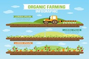 organic farming infography vector